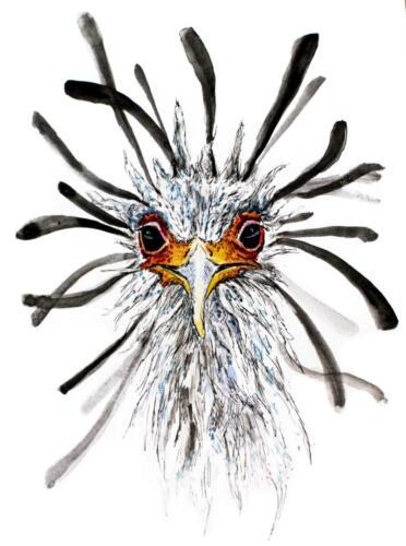 secreatarisvogel