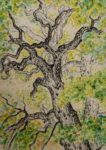 bomen-utrecht