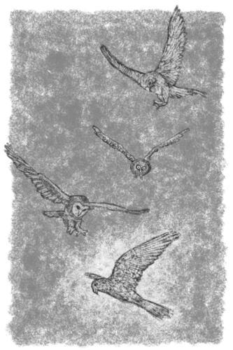 de-valk-tussen-de-uilen