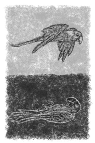 twee-papegaaien